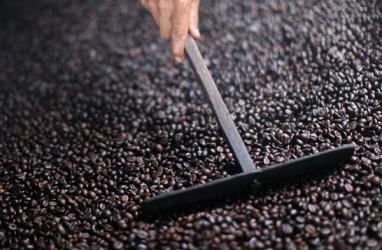 BIJI KOPI ROBUSTA : PTPN IX Incar Produksi 2.000 Ton