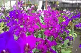 Menko Perekonomian: Potensi Florikultura Belum Tergarap
