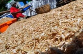 PERIKANAN BUDI DAYA : Konsumsi Pakan Ikan Lesu