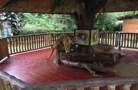 Taman Safari II Targetkan Kunjungan Naik 20%