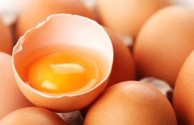 Jutaan Telur Tercemar Insektisida Beracun, Jerman Curigai Belgia