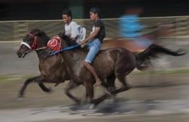 Balap Kuda Tradisional Dongkrak Kunjungan Turis ke Kabupaten TTU