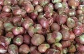 Tahun Ini, Impor Benih Bawang Merah Masih Nol