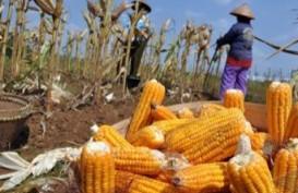 Kementan Bangunkan Lahan Suboptimal di 7 Provinsi
