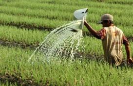 Deflasi di Perdesaan Kerek Nilai Tukar Petani