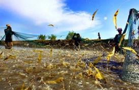 Seafood Indonesia Ditolak di Amerika Serikat Karena Ini