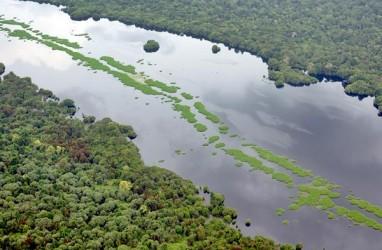 Sinar Mas Selesaikan Peremajaan Kebun Sawit di Riau 2027