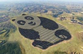 Panda Raksasa Tertua di Dunia Ulang Tahun ke-35