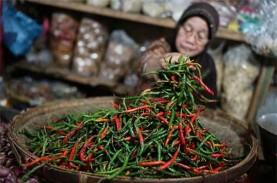 HORTIKULTURA : Produksi Cabai Surplus, Toko Tani Jadi…