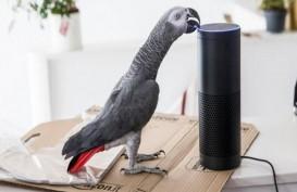 Burung Beo Ini Sukses Belanja Online dengan Meniru Suara Pemilik