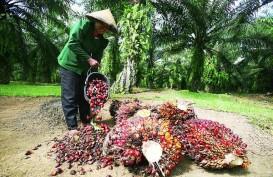 Petani Sawit Swadaya di Sintang Kembangkan Komoditas Alternatif