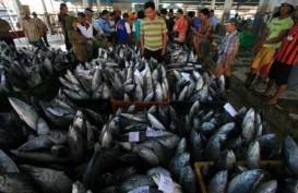 3 TAHUN JOKOWI-JK: Pendapatan Budidaya Ikan Naik 30%, 317 Kapal Ditenggelamkan