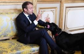 Anjing Presiden Macron Tertangkap Kamera Pipis di Istana Elysee