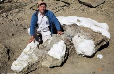 Arkeolog Temukan Fosil Utuh Tiranosaurus di AS