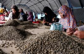 KOMODITAS PERKEBUNAN : Ekspor Kopi Global Naik 4,8%