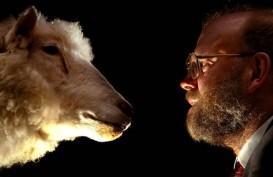 Tak Cuma Kera, Ternyata Domba Pun Bisa Kenali Wajah Manusia