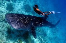 Ingin Mencoba Free Diving? Simak Dulu Tips Berikut