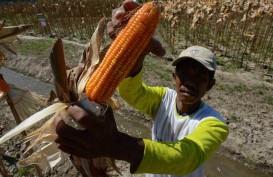 Nilai Tukar Petani Nasional Naik 0,28%