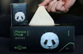 Perusahaan di China Olah Kotoran Panda Jadi Kertas Tisu