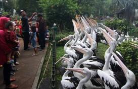 Kebun Binatang Ragunan Dipadati Puluhan Ribu Pengunjung, Ada Acara Satwa Buka Kado