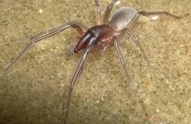 Spesies Baru Laba-laba Laut Ini Dinamai Bob Marley