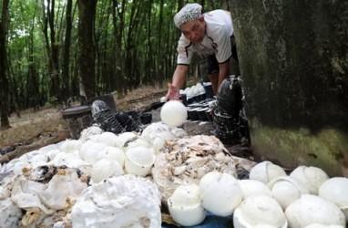 PEMBATASAN EKSPOR KARET : Eksportir Tetap Serap Produksi Petani