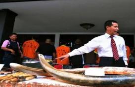 Akhirnya China Larang Perdagangan Gading Gajah