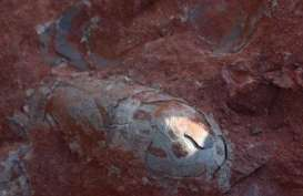 Pekerja Kontruksi Temukan 30 Telur Dinosaurus Berusia 130 Juta Tahun