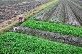 Program Transmigrasi Nasiona Prioritaskan Pembangunan…