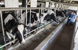 PPSKI: Ini 7 Kebijakan Peternakan yang Kontraproduktif