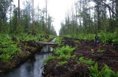 KONVERSI LAHAN GAMBUT : Produksi Hutan Tanaman Industri Bisa Turun
