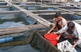 Produksi Ikan Kerapu 2017 Melompat