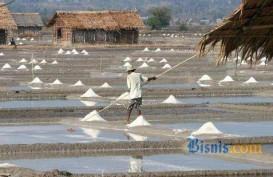 Soal Impor Garam, Susi Harap Petani Tidak Dirugikan