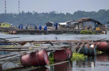 Penjualan Pakan Ikan 2018 Diprediksi Stagnan