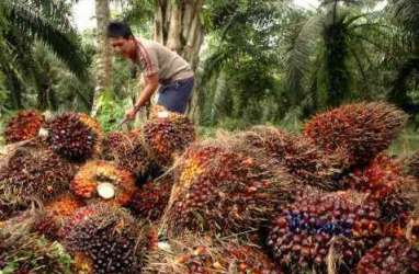 Tahun Ini, Austindo Nusantara (ANJT) Anggarkan Capex Rp1,2 Triliun