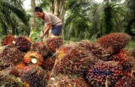 Austindo Nusantara (ANJT) Targetkan Produksi dan Penjualan CPO Naik 4%