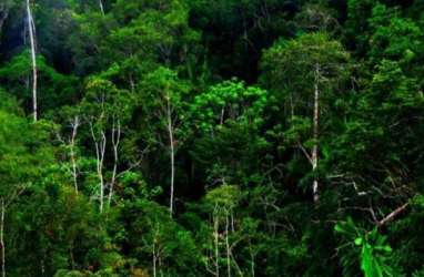 Sumbar Alokasikan 12.100 Hektare Lahan untuk Hutan Adat