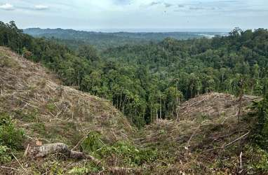 Deforestasi Banyak Terjadi di Kawasan Hutan Produksi