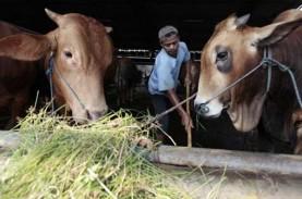 Asosiasi Peternak Sapi Bali Tak Setuju Pembatasan…
