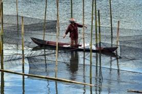 Keramba Jaring Apung Ditertibkan, Produksi Nila Melambat