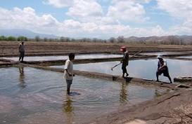 HMPG: Harga Garam Lokal Mahal Cuma Masalah Demand-Supply