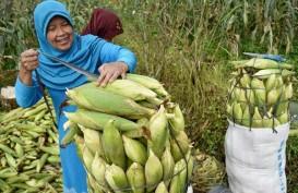Soal Impor Jagung, Petani Minta Presiden Tegas