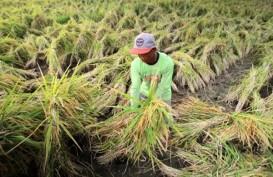 Program Ketahanan Pangan : Asuransi BUMN Dorong Lini Pertanian