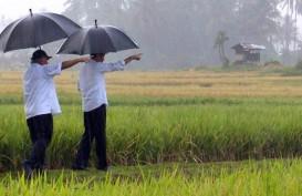 Presiden Jokowi Tinjau Aktivitas Padat Karya Tunai di Ambon