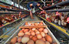 Cuaca Buruk,  Harga Telur Ayam Meroket