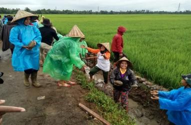 Cerita Nurbaya dan Padat Karya Tunai di Panyakalang