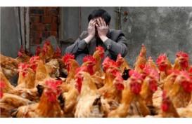 Pemerintah Tetapkan Batas Atas & Bawah Harga Ayam dan Telur