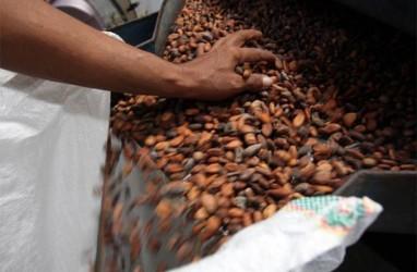 Produksi Kakao Bali Turun 50%, Ekspor Biji Fermentasi Naik 80%