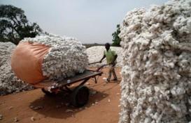 Pasokan Kapas Global Bakal Defisit
