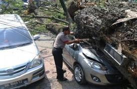 Hujan Deras dan Angin Kencang Landa Bandung, Tiga Pohon Tumbang